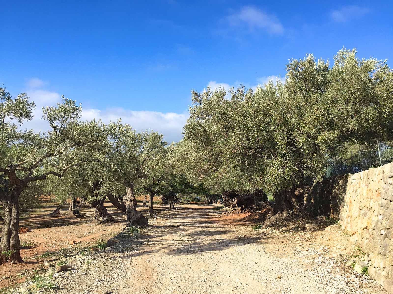 Tagesausflug-Mallorca-Westküste-Wanderung-Paella-Boot-Port-de-Soller-3