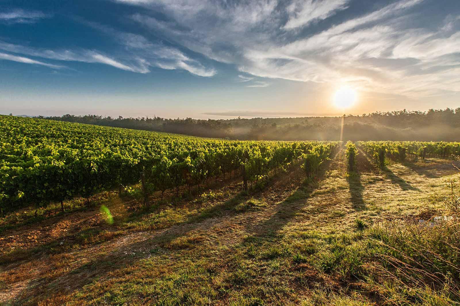 Weingut-Besuch-Mallorca-Weinprobe-Mallorca-4